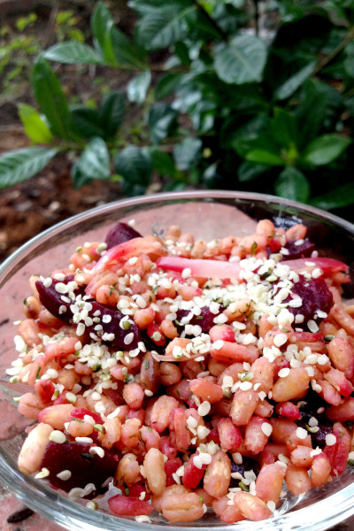 Barley Beet Salad Picture